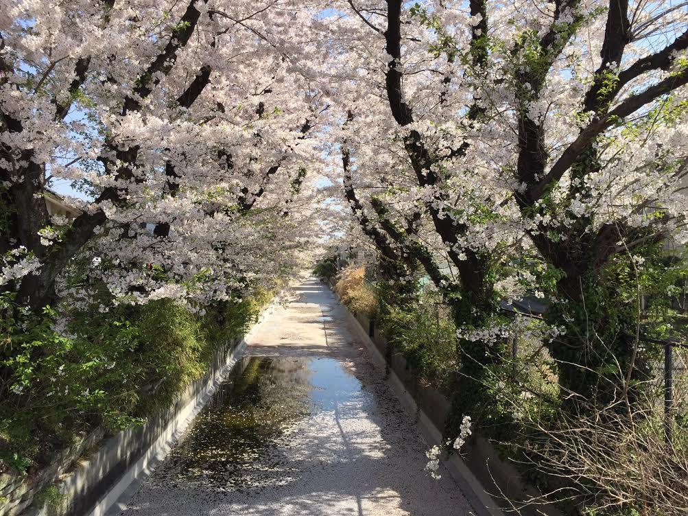 神奈川県 相模川左岸 土地改良区